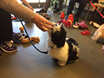 Puppy Party Image